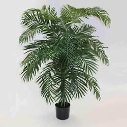 Areca Palm 6ft