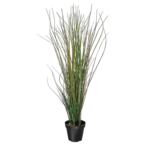 Potted plant grass