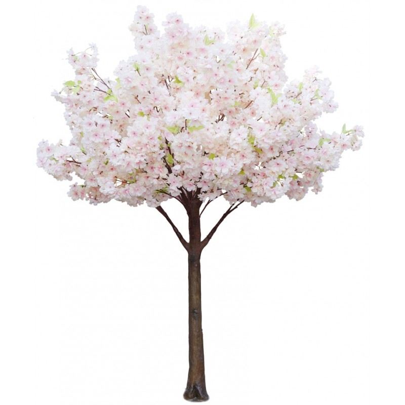 cherry-blossom-tree-cream-14m-tall